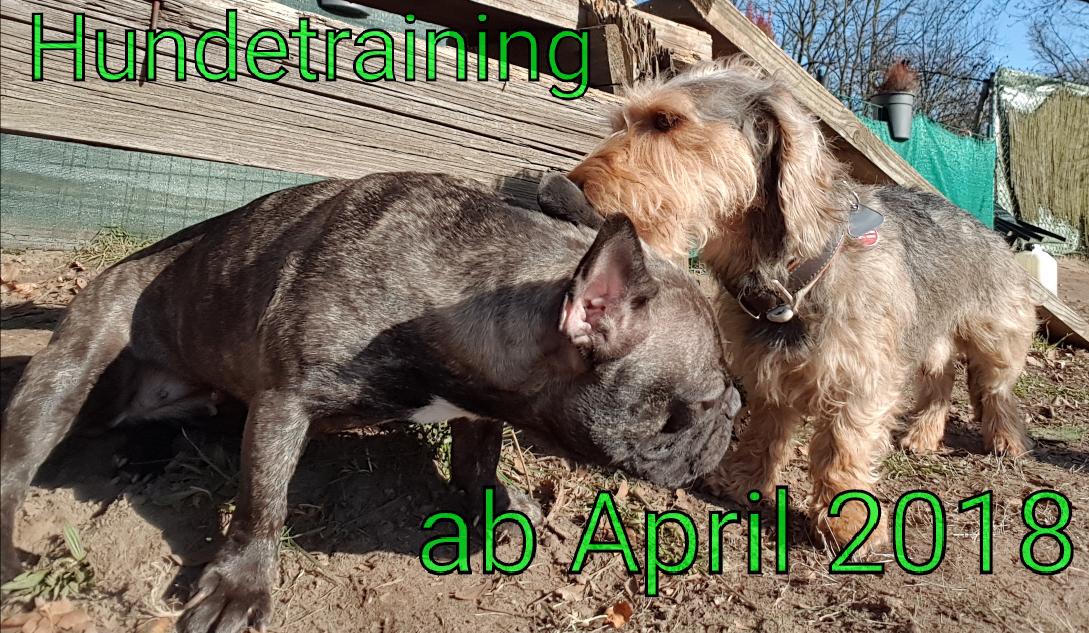 …Habt ihr schon gehört? :-) Hundetraining ab April 2018
